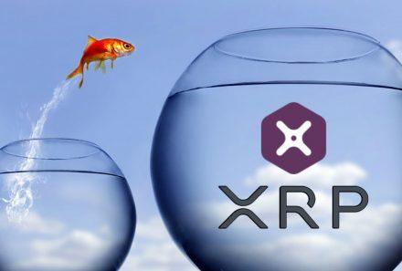 ریپل به دنبال توسعه هر چه بیشتر xRapid
